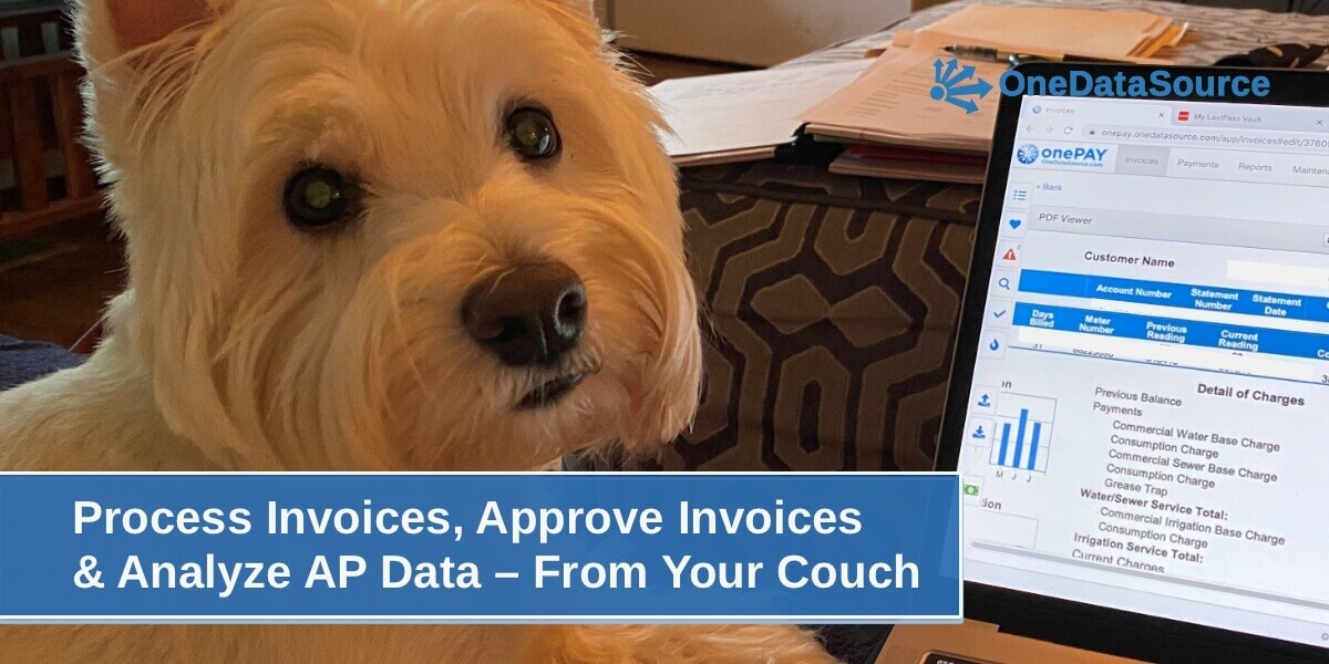 Dog Process Invoices From Couch